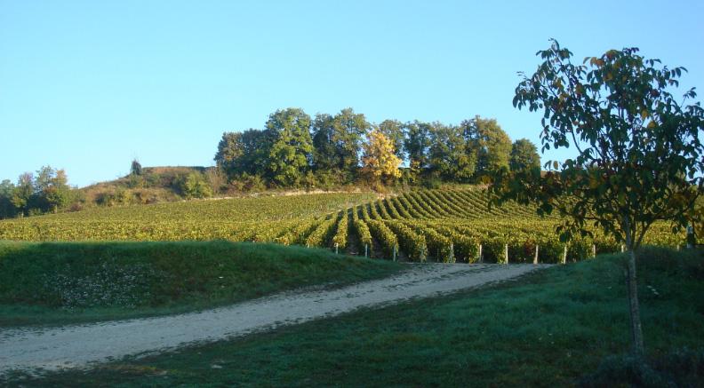 champagne-robin-histoire-vigneron-independant